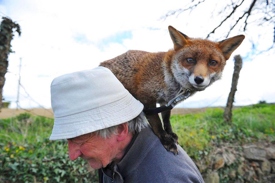 muž a líšky (6)