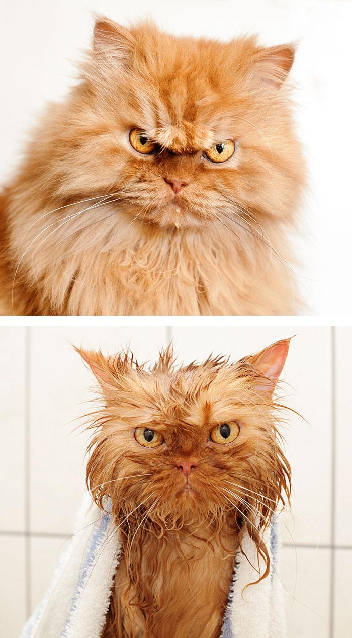 zvierata po kupani (2)