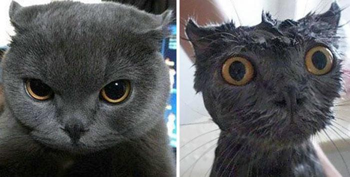 zvieratá pred a po kúpaní (5)