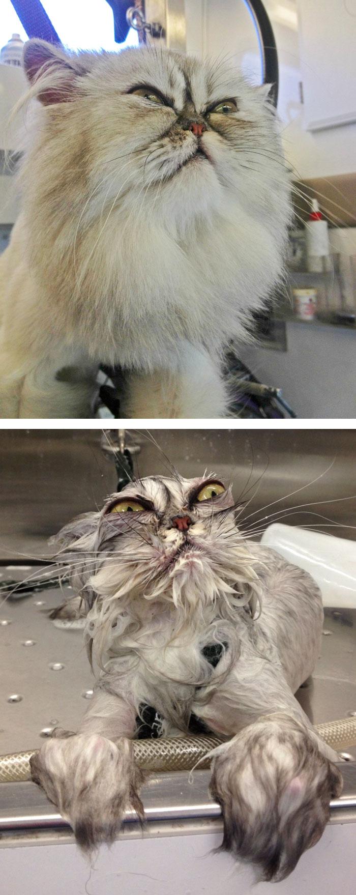 zvieratá pred a po kúpaní (9)