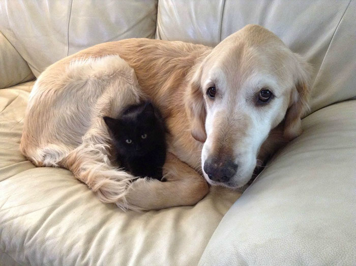 pes a macka (2)