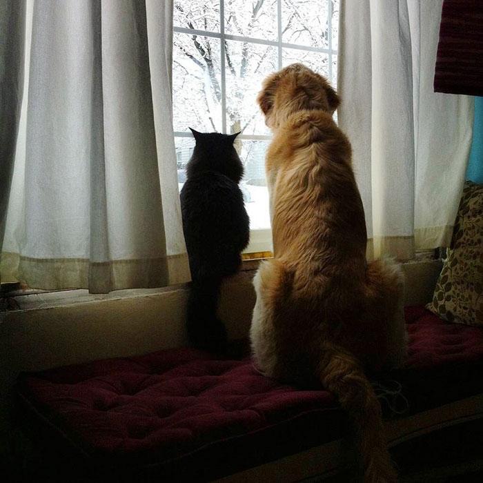 pes a macka (5)