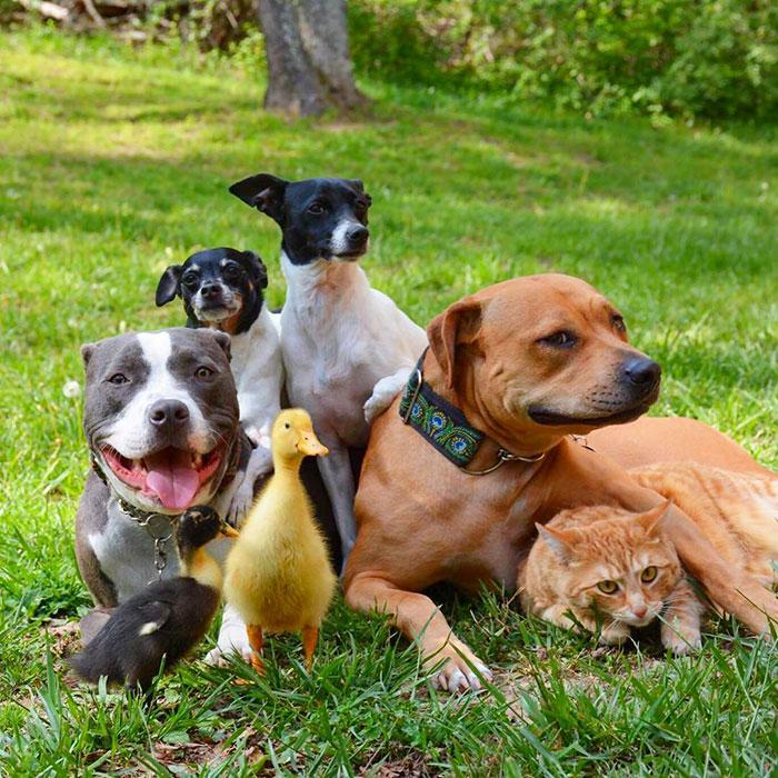 nezvycajna zvieracia rodinka (1)