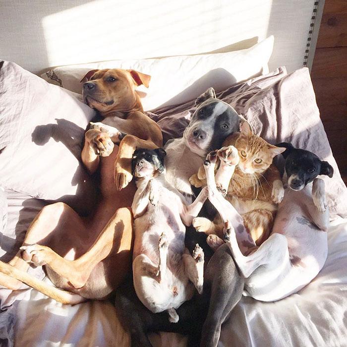 nezvycajna zvieracia rodinka (11)