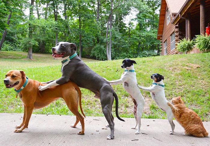 nezvycajna zvieracia rodinka (2)