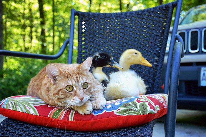 nezvycajna zvieracia rodinka (6)