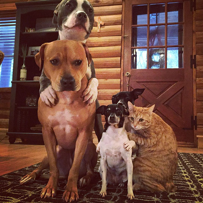 nezvycajna zvieracia rodinka (7)