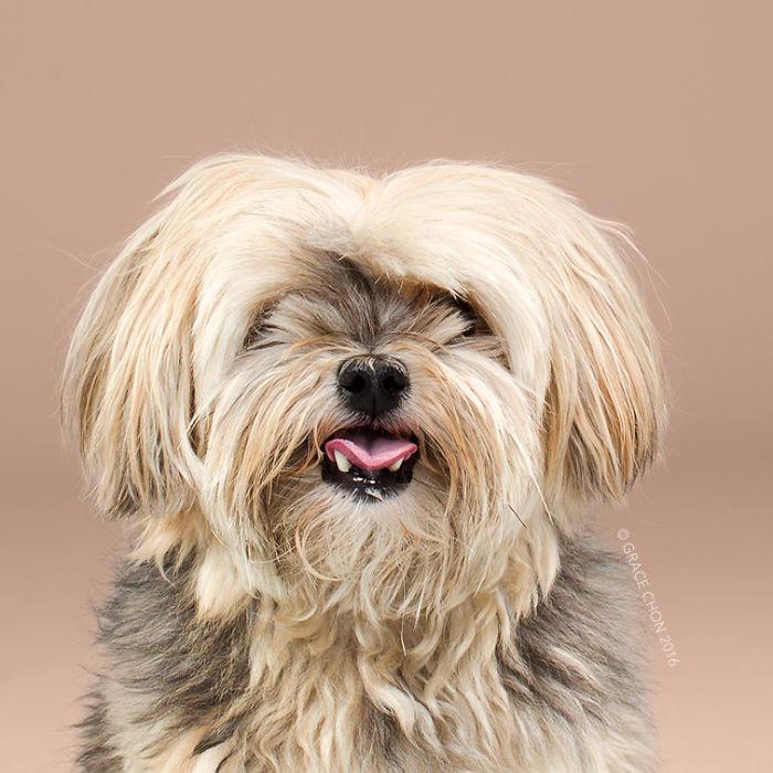 psy pred strihanim (1)