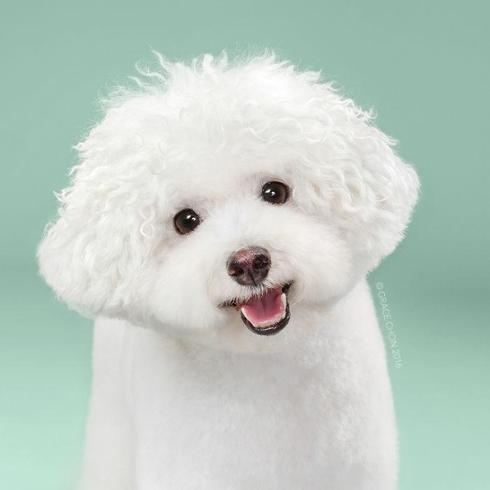 psy pred strihanim (4)