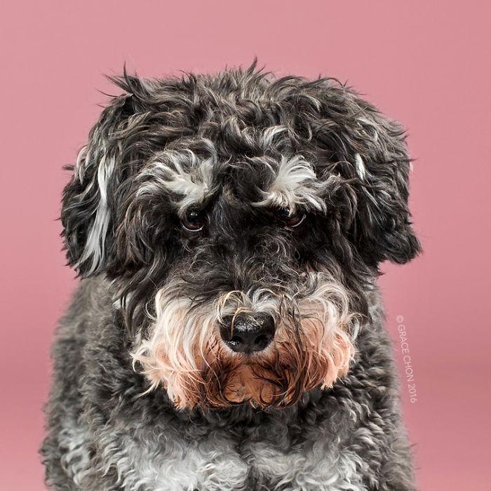 psy pred strihanim (5)