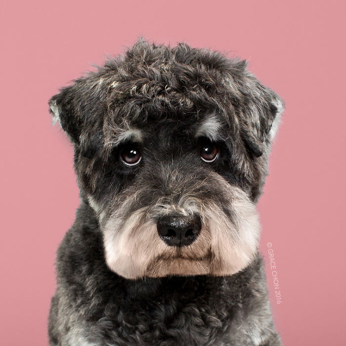 psy pred strihanim (6)