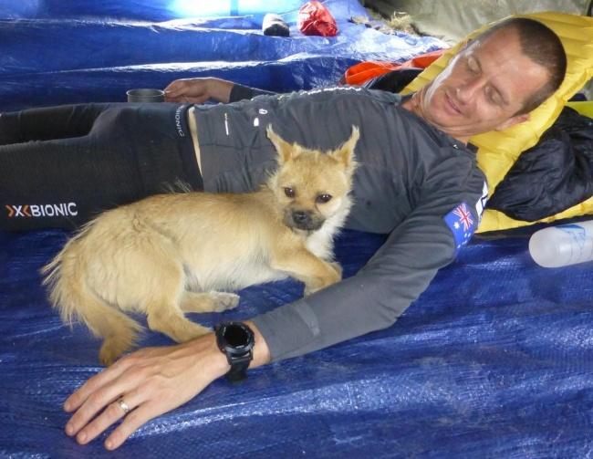 oddaný pes (1)