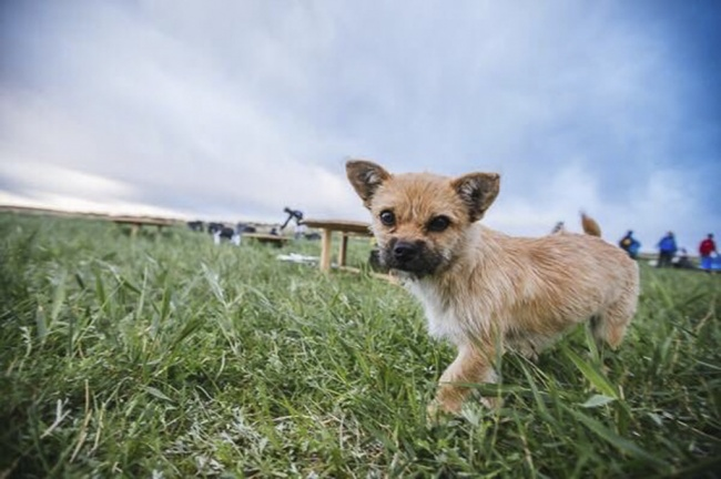 oddaný pes (4)
