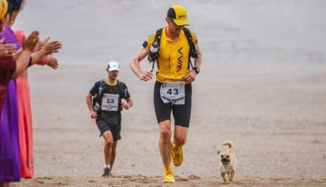 pes maratonec (5)
