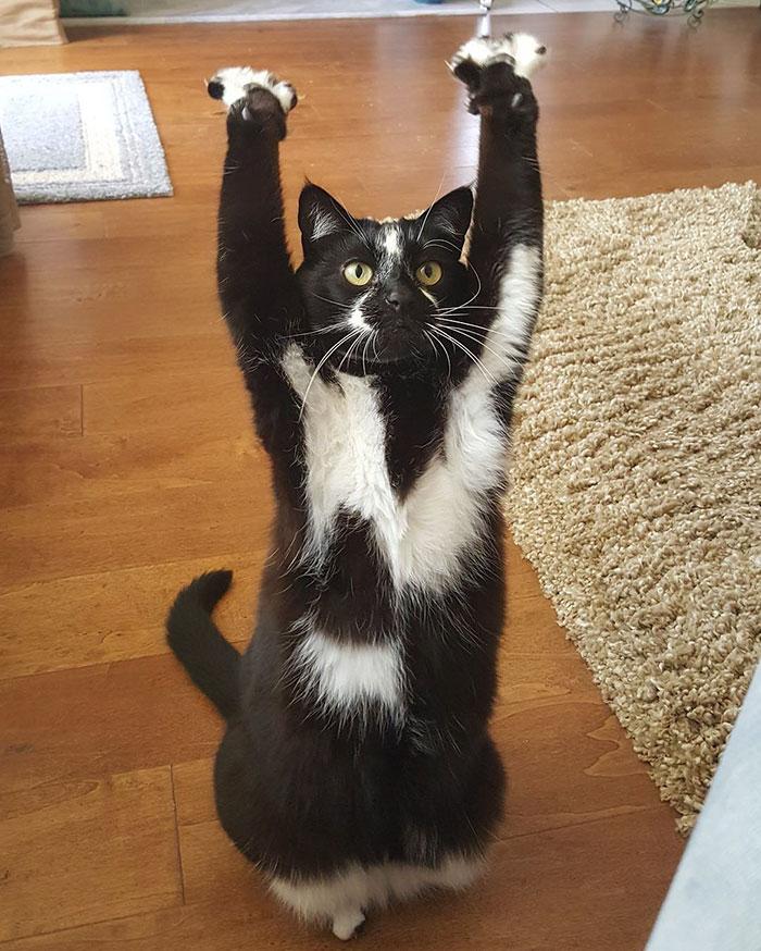 stojaca mačka (7)