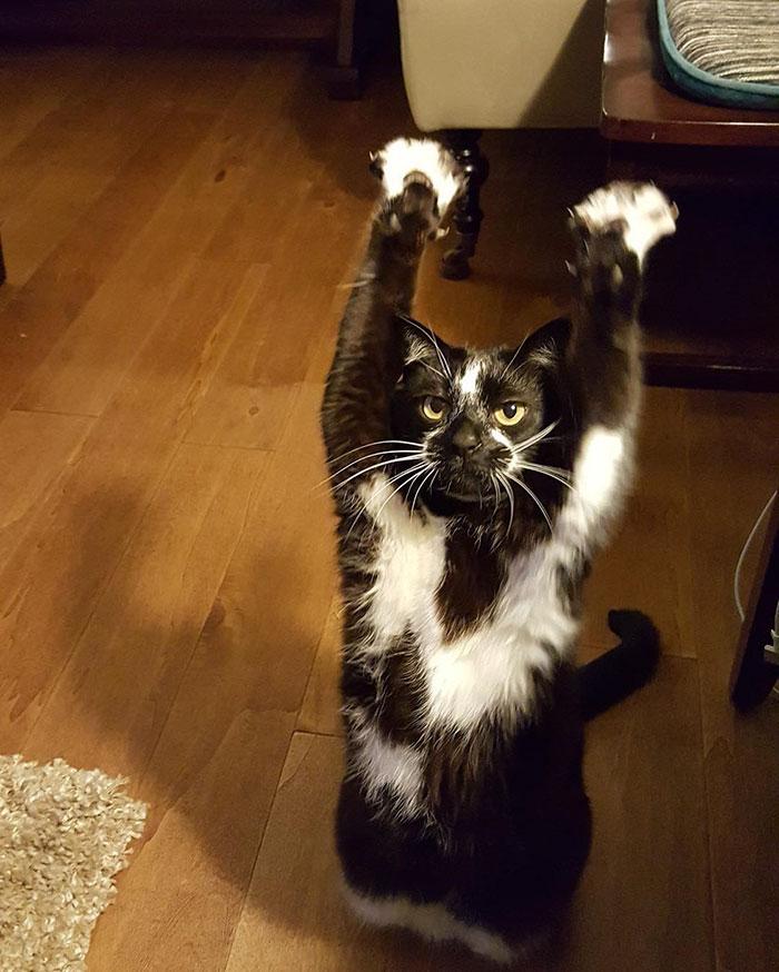 stojaca mačka (9)