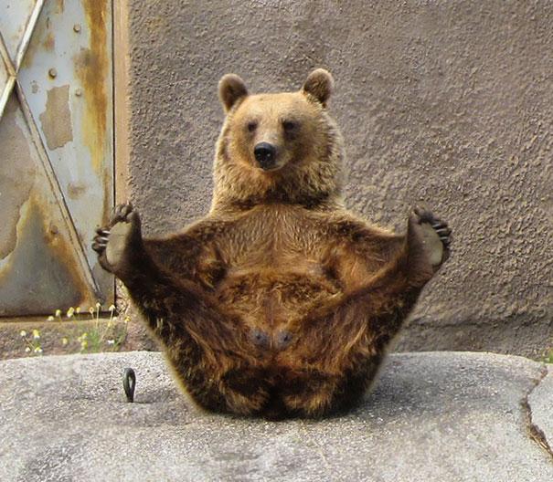 zvieratka joga (3)