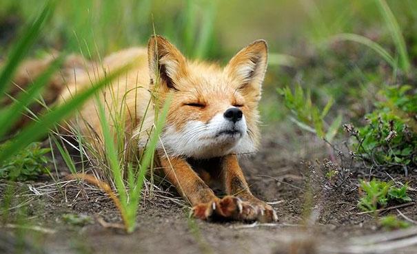 zvieratka joga (4)