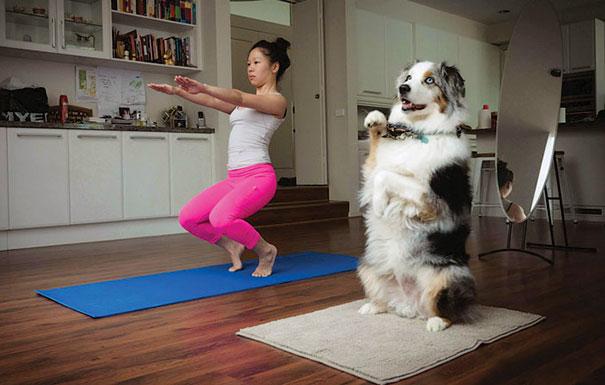 zvieratka joga (8)