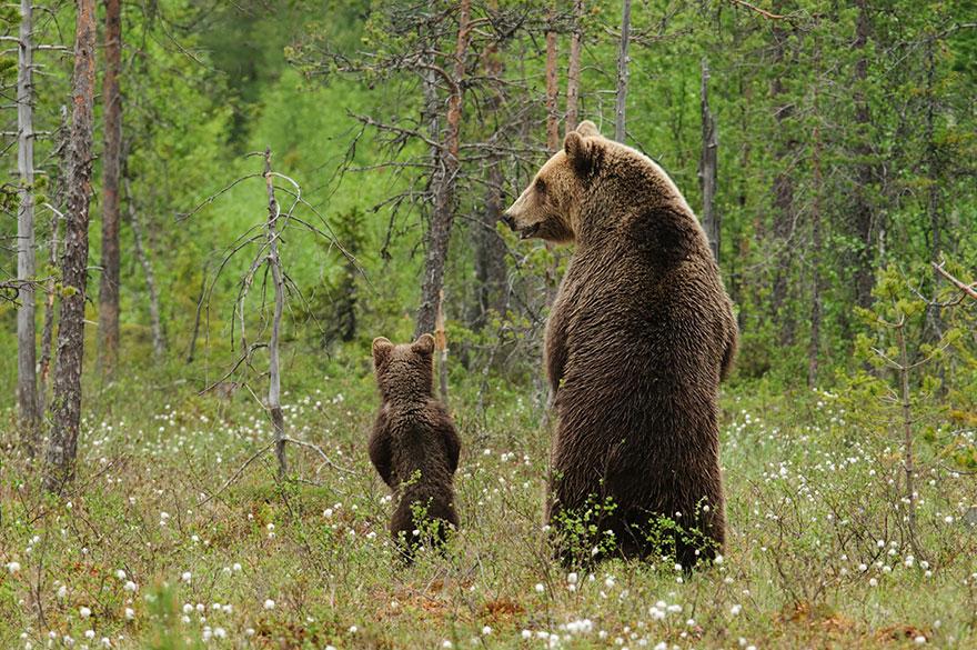 medvedie mamky