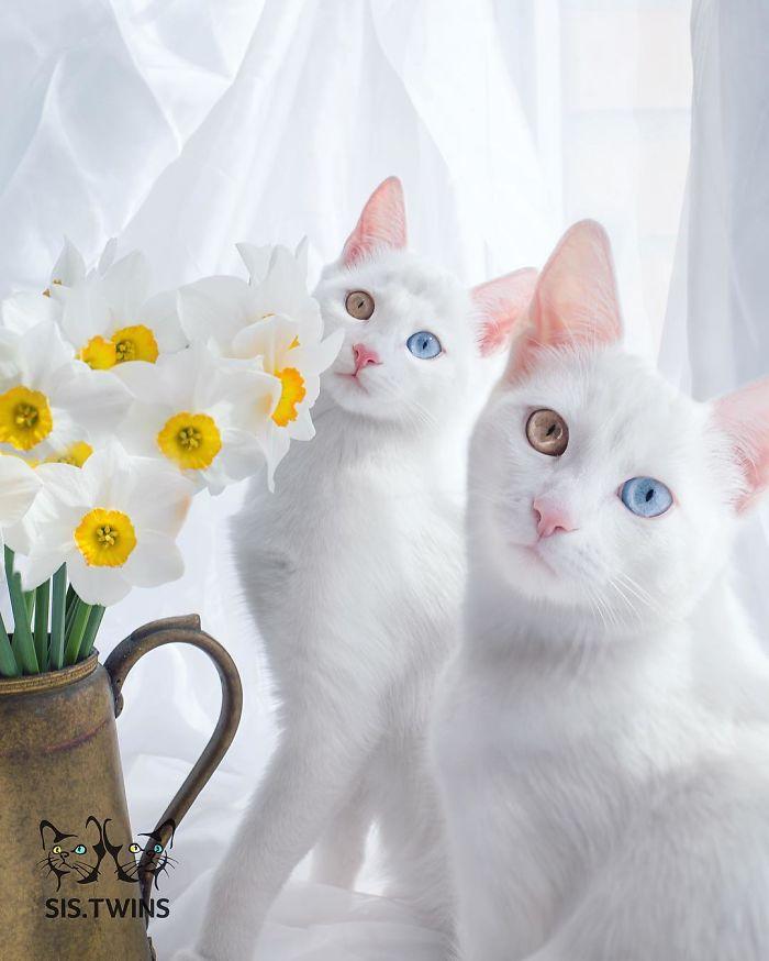 dokonalé mačky