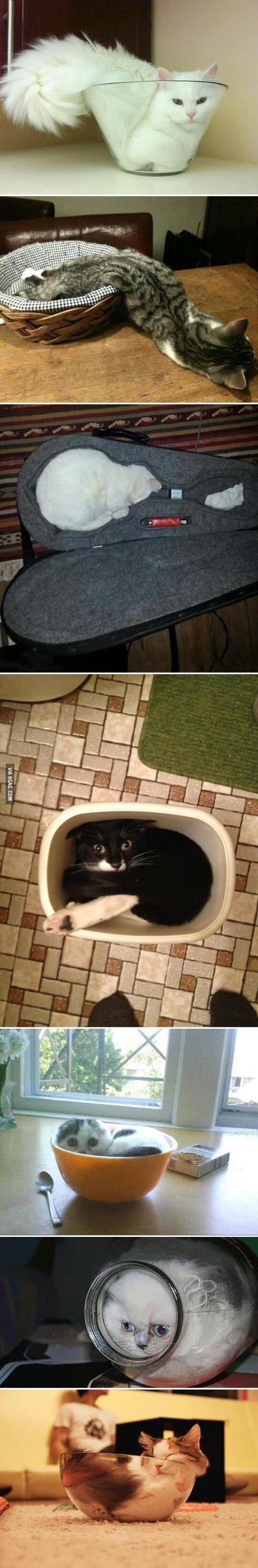 kvapalné mačky