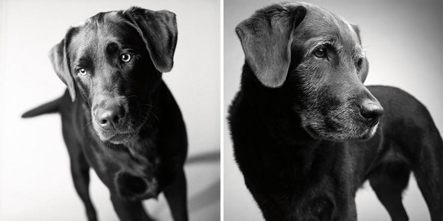 starnutie-psov-1