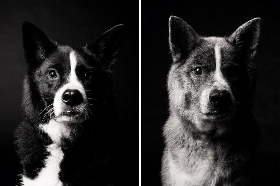 starnutie-psov-10