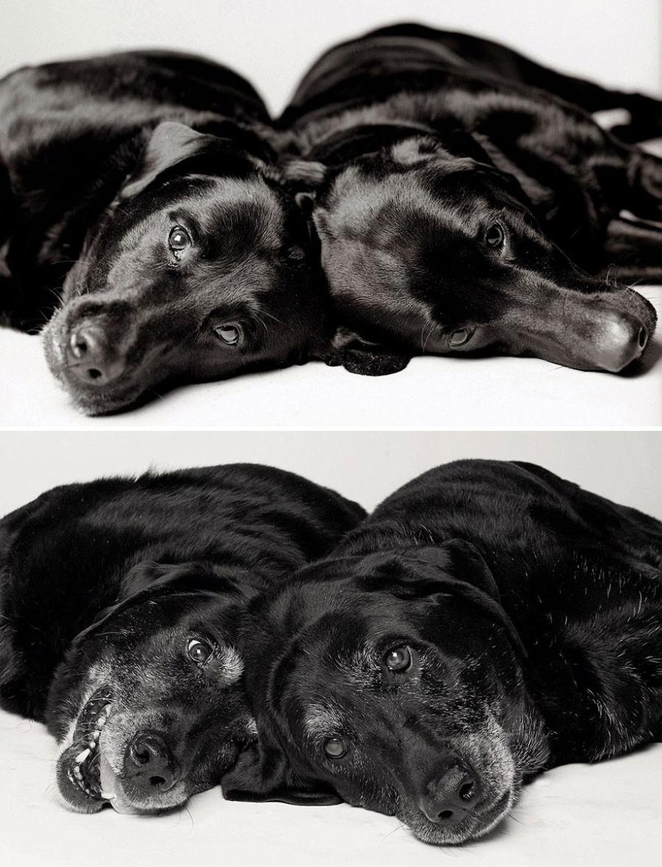 starnutie-psov-13