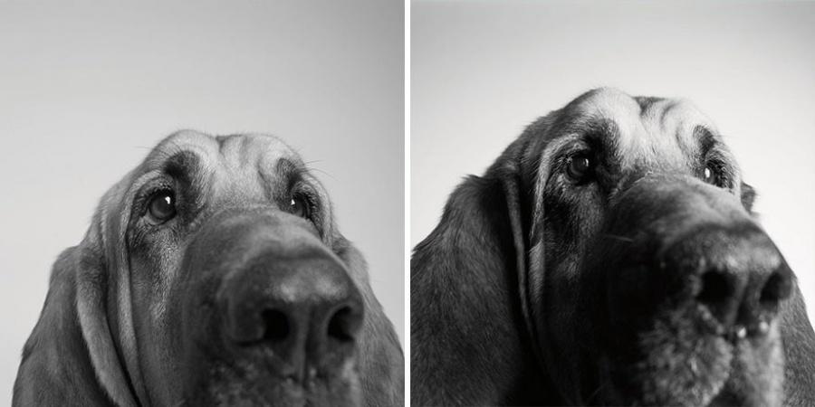 starnutie-psov-5