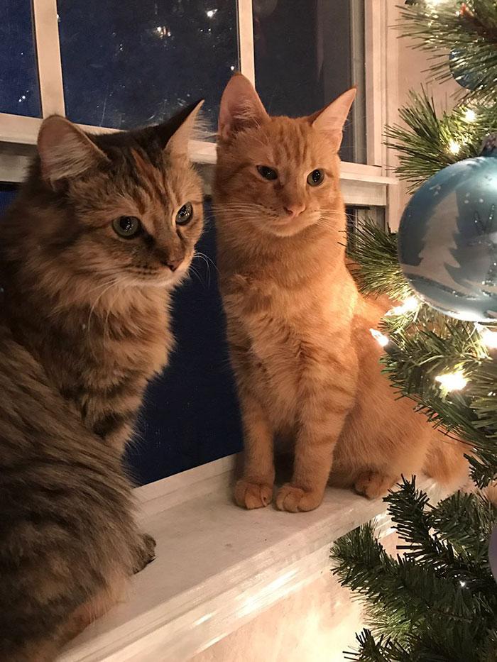 zamilované mačky