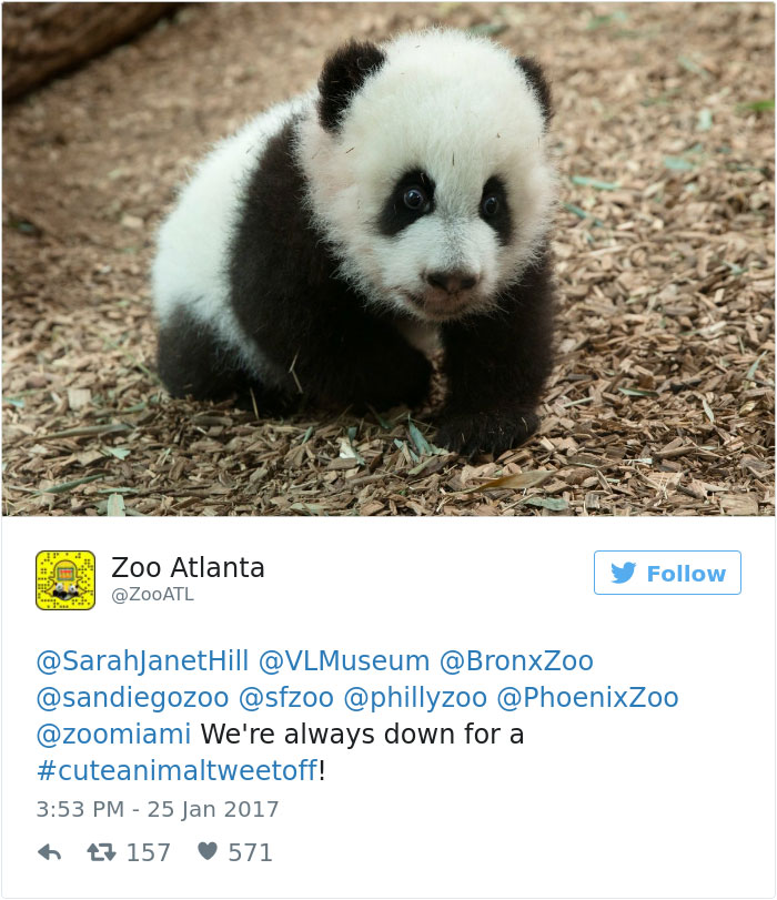 cute-zoo-animal-tweet-off-15