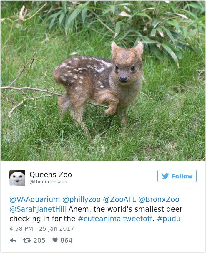cute-zoo-animal-tweet-off-18