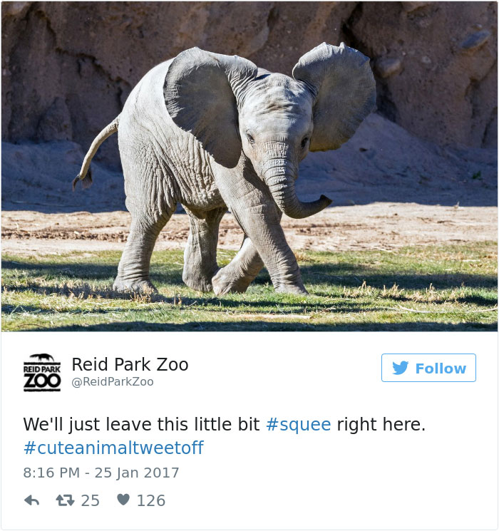 cute-zoo-animal-tweet-off-6