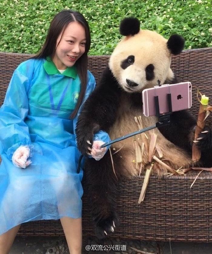 selfie panda (2)