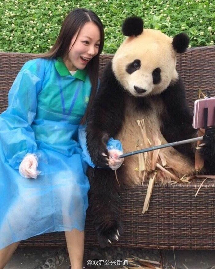 selfie panda (5)