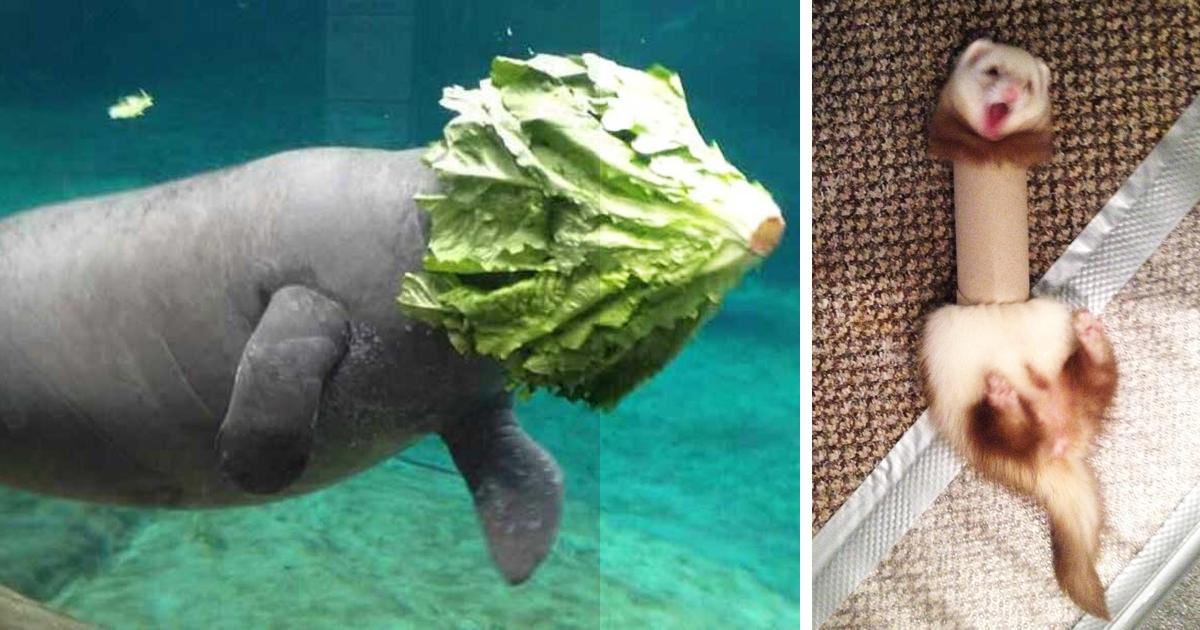 Najvtipnejšie faily zvierat, aké ste videli