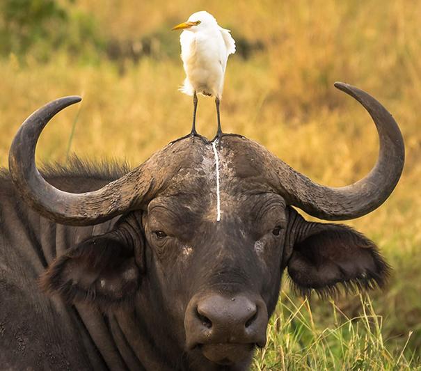 vtipne-faily-zvierat-13
