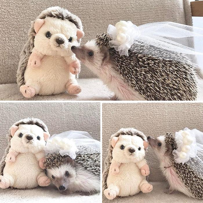 deň ježkov (4)