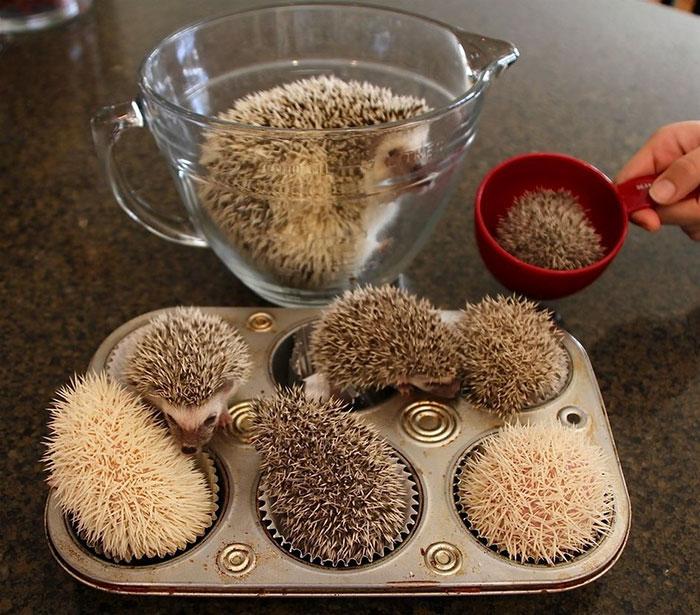 deň ježkov (8)