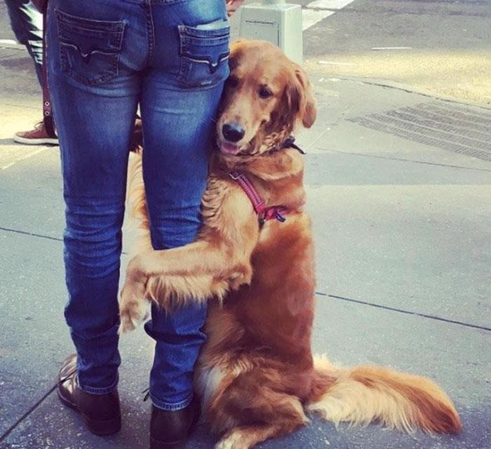 pes rozdava objatia (1)