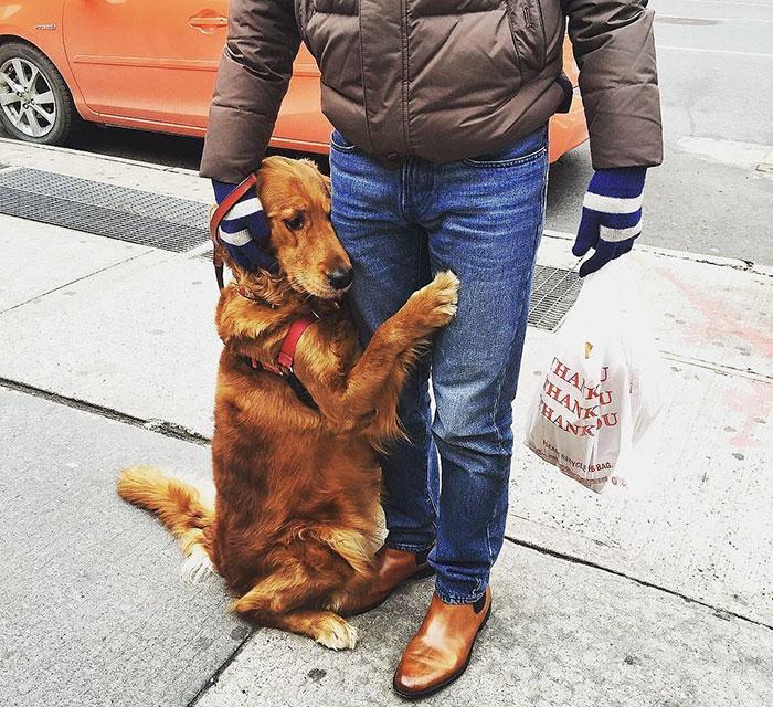 pes rozdava objatia (4)