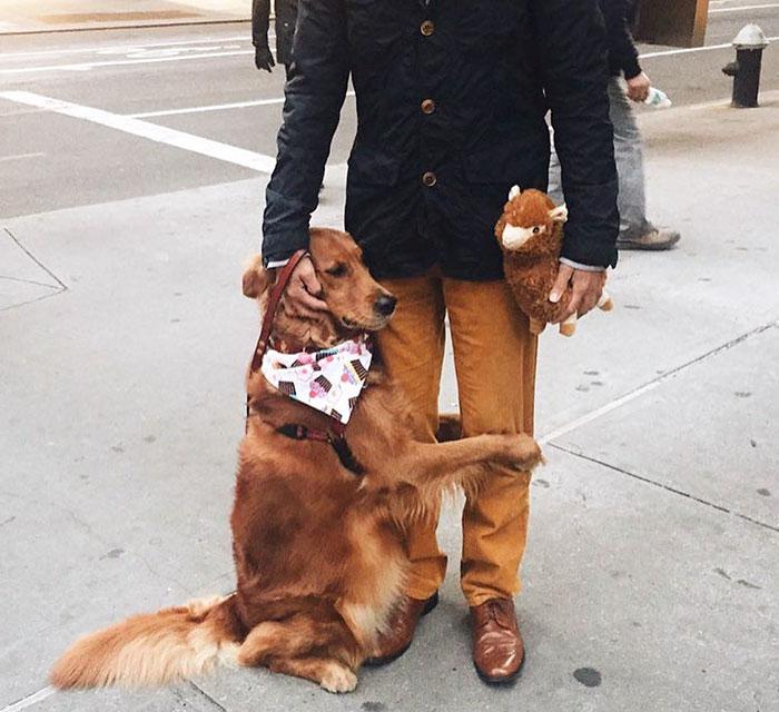 pes rozdava objatia (5)