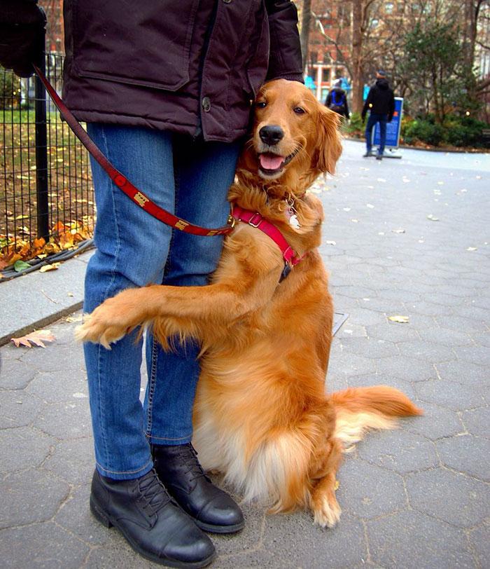 pes rozdava objatia (8)
