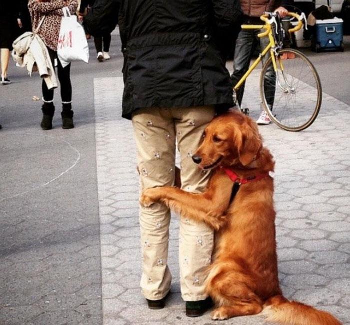 pes rozdava objatia (9)