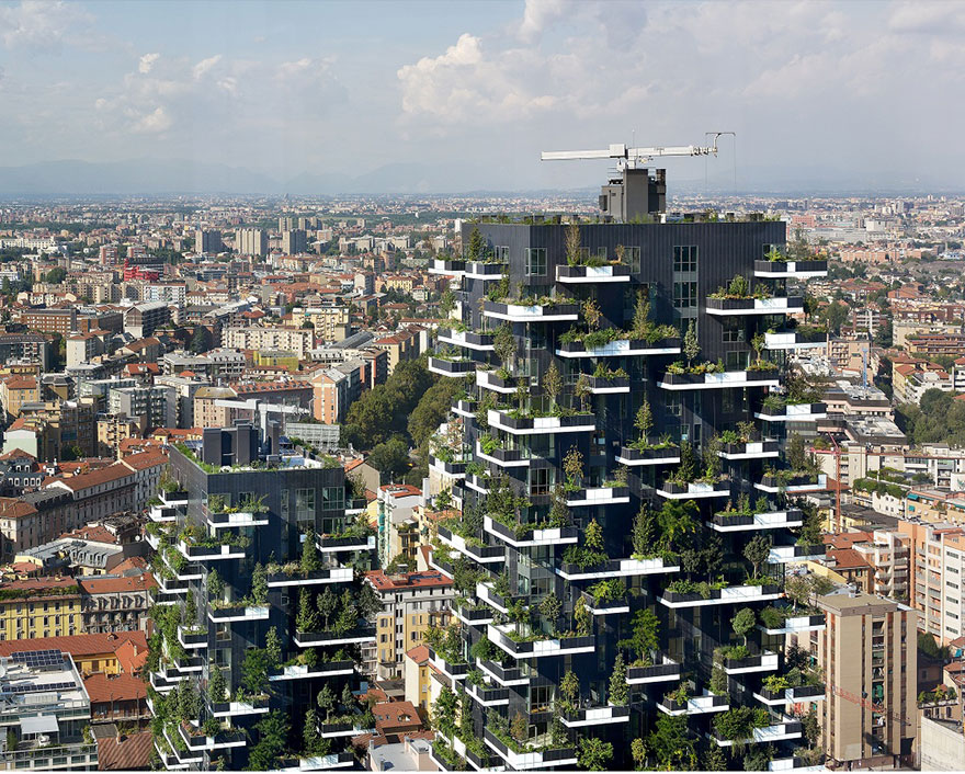 vertikalny les (6)