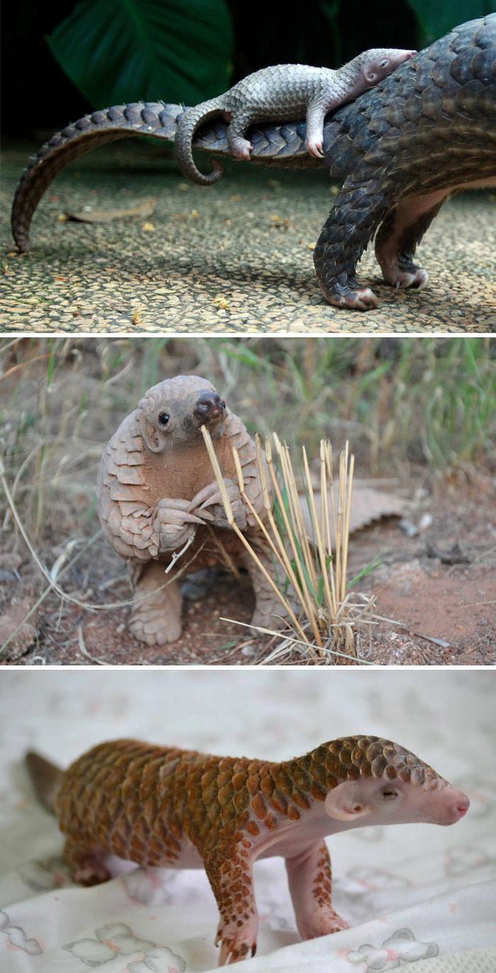 mláďatá živočíchov (3)