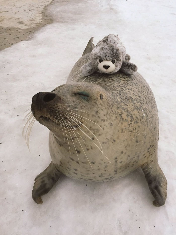 tuleň a plyšák (2)