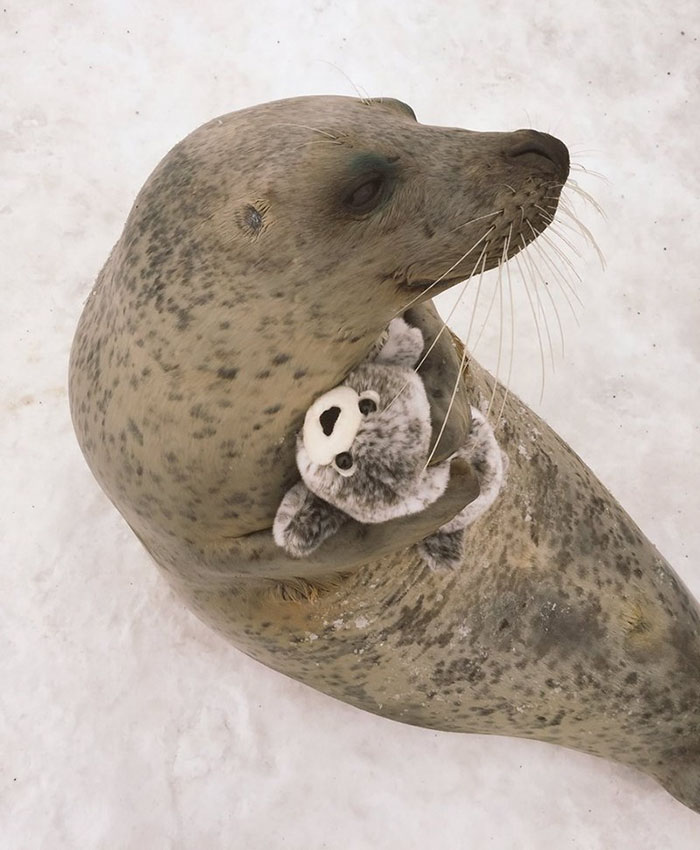tuleň a plyšák (3)