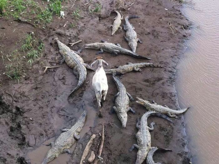 zvieratká majú všetko v p (7)